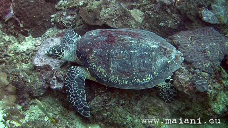thailand. marine. invertebrates. reptiles.